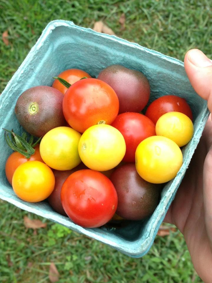 c8905-tomatoesreally